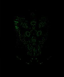 На фото изображено Nano Skeleton